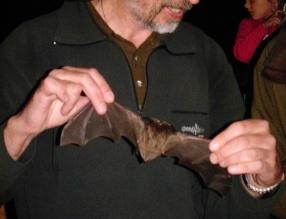 Evropská noc pro netopýry