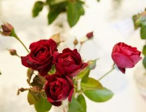 Svět květin v Trutnově