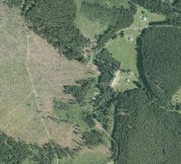 10 let od orkánu Kyrill a lesy se již opět zelenají