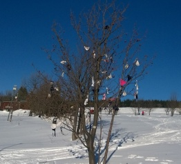 Podprsenkový strom v Malé Úpě